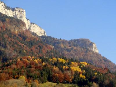 Forêt de Dingy Saint Clair à l'automne