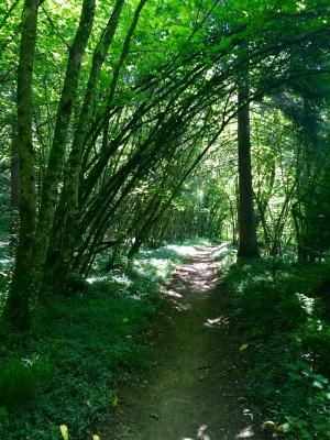 Sentier du Fier Dingy Saint Clair